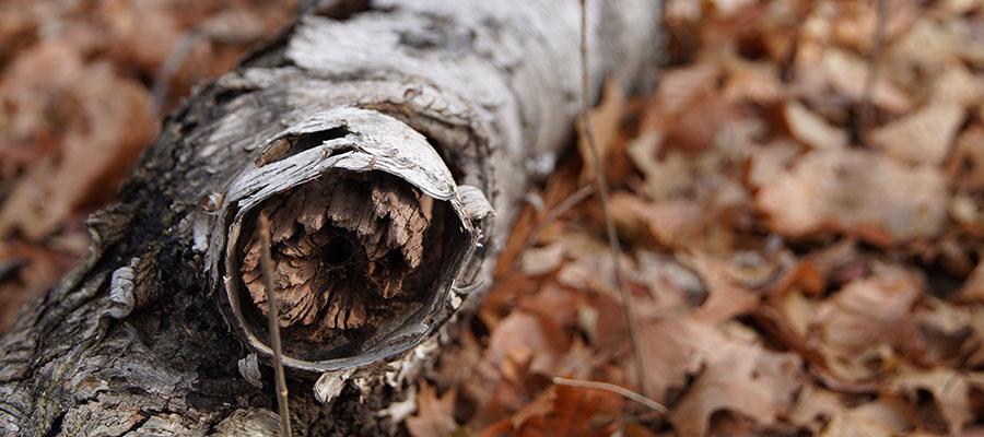 Cleveland Ohio Tree Removal Company