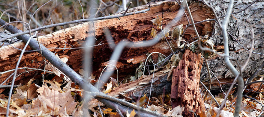cleveland heights oh tree removal company