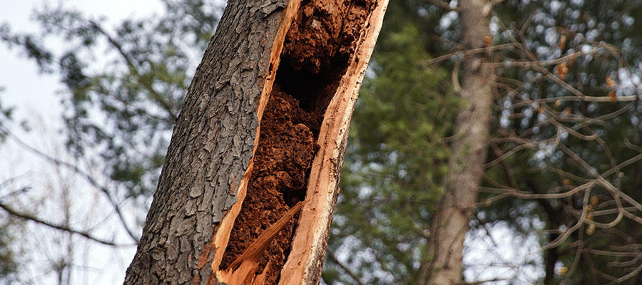dead tree removal company cleveland heights