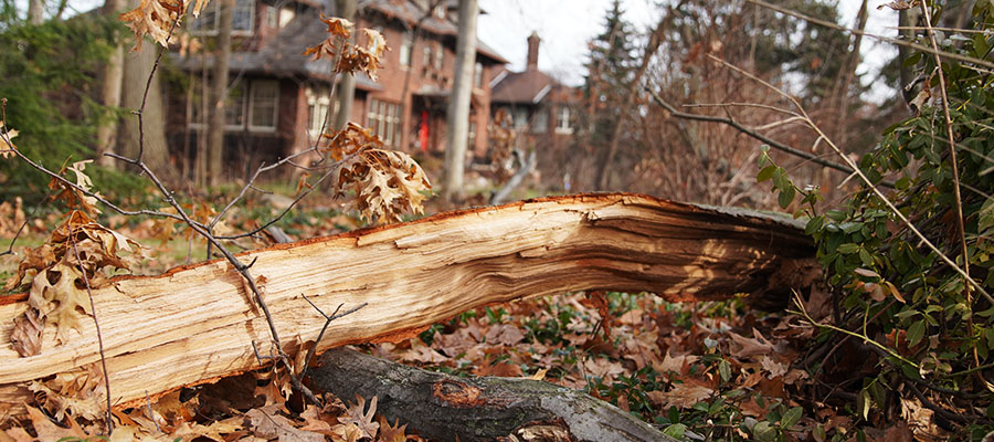 tree removal company in cleveland heights
