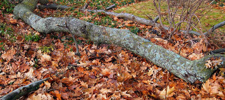 cleveladn tree company winter care