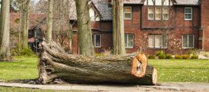 cleveland tree company deep root treatment