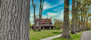 cleveland heights tree company transplant