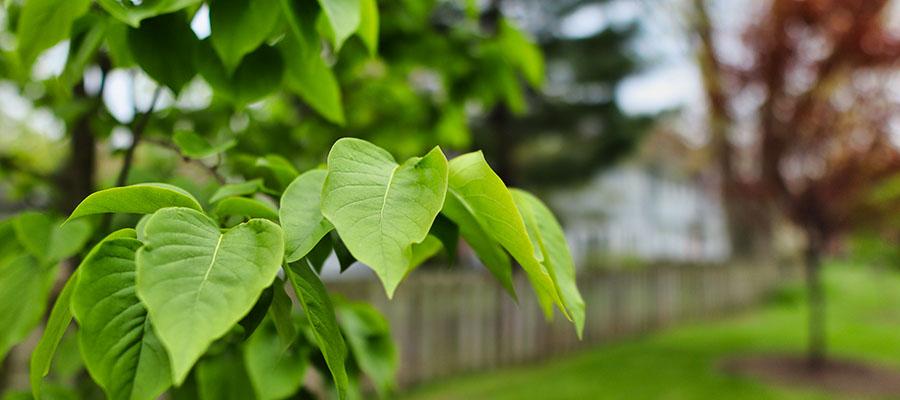 cleveland tree company bare spots
