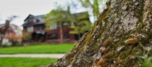 cleveland tree company soil test