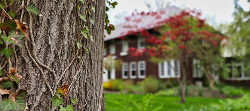 cleveland heights tree company mature tree advice