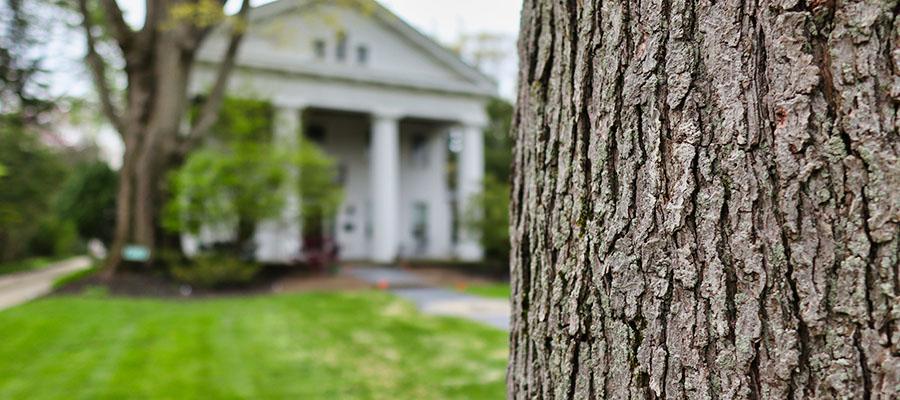 cleveland heights tree company shrub spacing