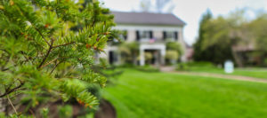 cleveland tree company services