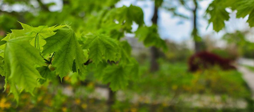 cleveland tree service company advice