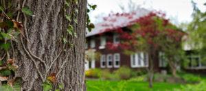 tree company in hunting valley ohio